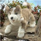 Image of Folkmanis® Wolf Hand Puppet