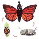 Image of Folkmanis Monarch Life Cycle Hand Puppet